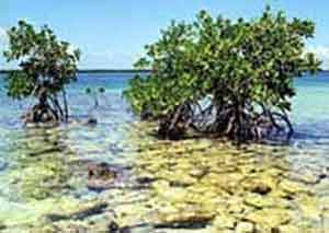 Restaurarán barreras protectoras en zonas ribereñas de Cuba